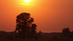 The sunset above field with trees. TIME LAPSE, TELEPHOTO LENS SHOOTING Stock Footage