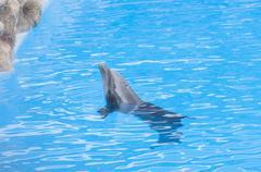 Dolphins swimming Kuvituskuvat