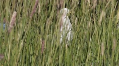 seagull hid  in  grass a breeze on the sea coast - stock footage
