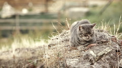 Quiet cat sleeping on a rock in the center of Rome, Roma, Torre Argentina, Stock Footage