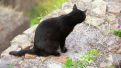 Quiet cat on a wall in the center of Rome, Roma, Torre Argentina, Stock Footage