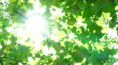 Foliage through the rays - stock footage