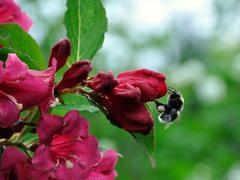 humble bee - stock photo