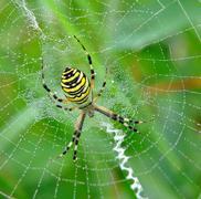 spider in her spiderweb - stock photo