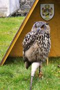 eagle owl - stock photo