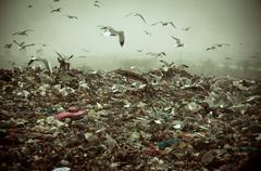 Apocalyptic scene of birds flying over the dump Stock Photos
