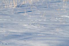 Stock Photo of snow dry grass