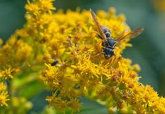 wasp  flower closeup - stock photo