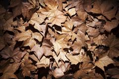 dry leaves with vignettes - stock photo