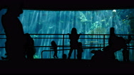 Stock Video Footage of 4K Aquarium Silhouettes 01 Family Crowds