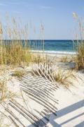 Dune fences at Gulf Islands National Seashore - stock photo