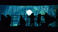 Stock Video Footage of 4K Aquarium Silhouettes 02 Family Crowds
