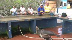 Local fish market in Santa Cruz with sea lion and pelicans Stock Footage