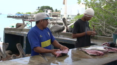 Local selling and weighing fish in Santa Cruz, Galapagos Islands, Ecuador - stock footage