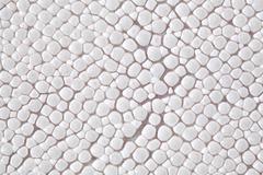 Ray skin texture Kuvituskuvat