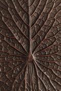 Bronze lotus texture Stock Photos