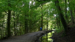 People walk in woods - stock footage
