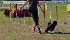 dog agility, weave poles - stock footage