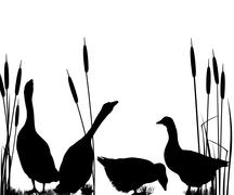 goose silhouettes - stock illustration