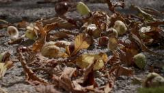 slow motion falling chestnuts - stock footage
