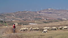 Shepherd with flock of sheep on a mountain pasture Stock Footage