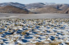 Stock Photo of snowy landscape on a high altitude tibetan mountain pass