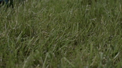 Mowing grass detail slow motion Stock Footage