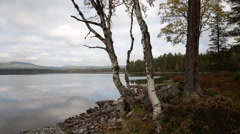 Early Fall at Lake motorized dolly shot autumn - stock footage