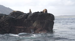 Sea lions at the rocks in front of Punta pitt, San Cristobal Stock Footage