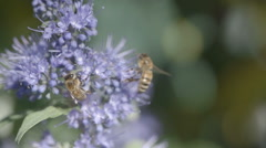 Honey bees on flower in wind slow motion Stock Footage