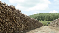 piles of wood in paper mill in sunny day with trees in the background. Pan - stock footage