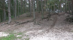 4k Old gnarly Pine Trees on sandy hills pan Stock Footage