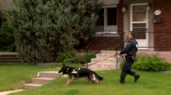 Stock Video Footage of K9 police dog and canine officer running on the street in peaceful neighborhood