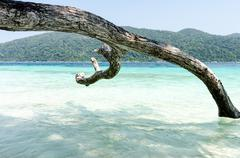 white sand beach in thailand. adang-rawee. thailand, lipe island - stock photo