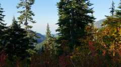 Olympic National Park, Wilderness, Trees, Peaks, 4K, UHD Stock Footage