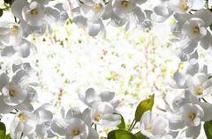 frame white flowers apple tree - stock illustration