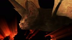Spooky Halloween Bat - 1080p - stock footage