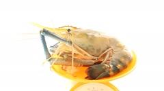 Closeup big fresh shrimp seafood on scale Stock Footage