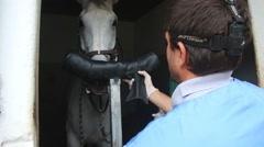 Vet preparing horse to surgery Stock Footage