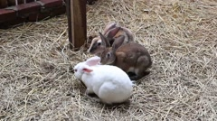 Cute rabbits Stock Footage