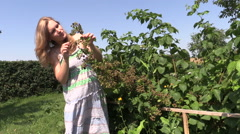 Pregnant woman eats blackberry berry from bush twig in garden Stock Footage