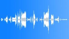 Pig Oink Sounds Sound Effect