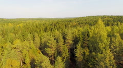 Flying over large forest in daylight Stock Footage