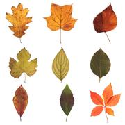 Autumn Leaves Collection 01 - stock photo