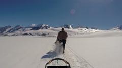 Alaskan dog sledding USA Stock Footage
