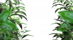 Blurred leafs With Water Drops animated background with isolate mask Stock Footage