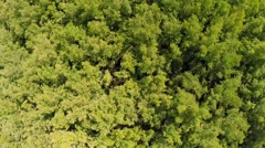Stock Video Footage of Overhead Shot Of Trees