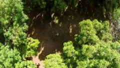 Ascending Over Trees - stock footage