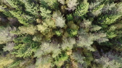Flying over forest - stock footage