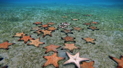 Stock Video Footage of Starfish crawling on the seabed, timelapse